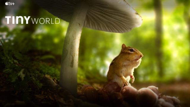 How was Apple TV's Tiny World filmed?